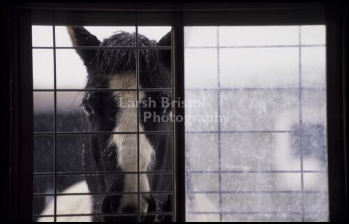 Horse in Snowy Window
