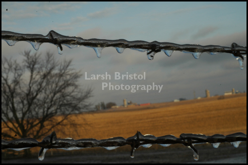 Icicles on Barbed Wire