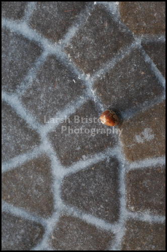 Ladybug On Brick Pavers