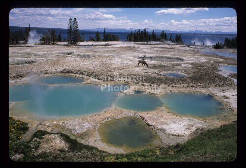 Yellowstone Geyser Pool