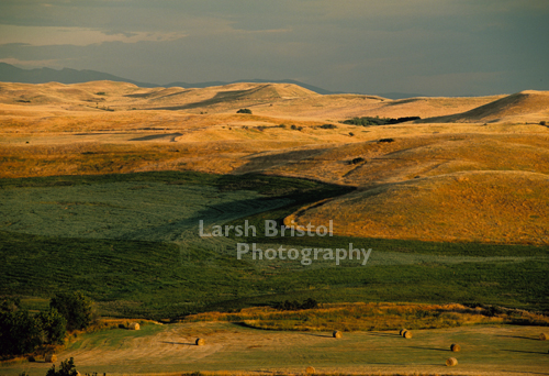 Wyoming Hayfield and Foothills