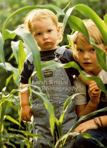 Children in Corn Field