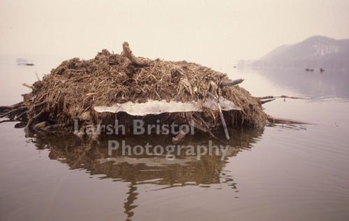 Beaver Hut - LBP20325