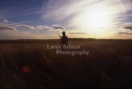 Silhouetted Pheasant Hunter