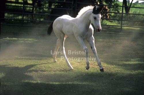Playful Colt