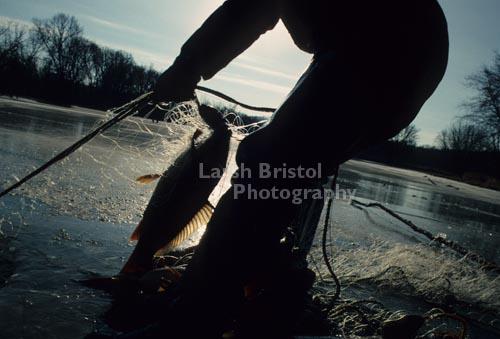 Fish Caught in Net