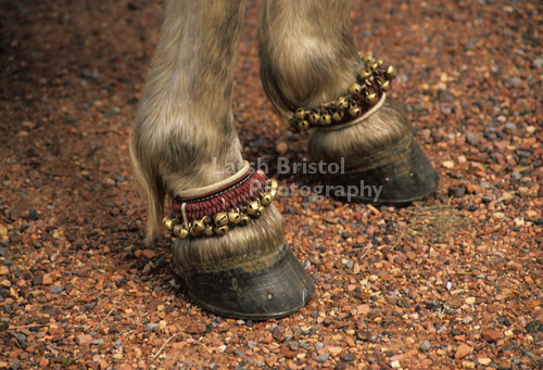 Bells on Horse's Ankles